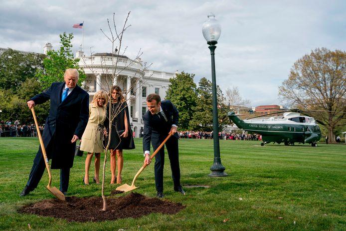 Trump en Macron stonden vorig jaar samen met schep in de hand om de boom een mooi plekje te geven in de tuin van het Witte Huis. Nu blijkt de boom na een jaar al dood te zijn.