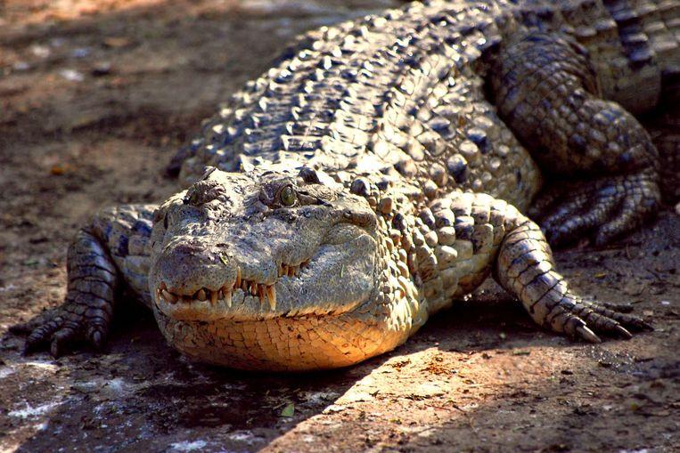 Een Filipijnse krokodil (archieffoto)