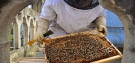 Imker opgelucht. 'Mijn 200.000 bijen op dak Notre-Dame hebben brand overleefd'