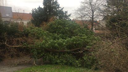 Stormwind zorgt in Leiestreek al voor zo'n 200 oproepen