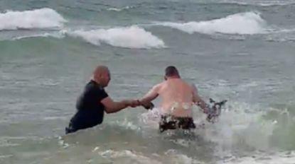 VIDEO. Kangoeroe verdrinkt bijna in zee, maar wordt net op tijd gered door twee agenten