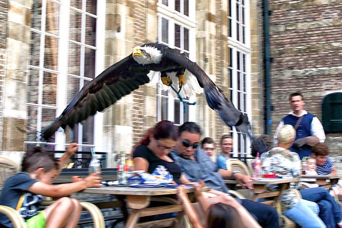 Een Amerikaanse zeearend scheert rakelings over de hoofden van bezoekers van het Markiezenhof in Bergen op Zoom. Ook tijdens de huidige Zomer aan het Hof staan dergelijke roofvogelshows op het programma, evenals schaken met manshoge stukken, voorlezen, creatieve workshops en een expositie over de kunst van het verbinden.