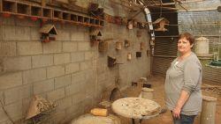"""Dieven roven 85 kanaries uit volières in Tongerlo: """"Die vogels hadden een emotionele waarde voor mij"""""""