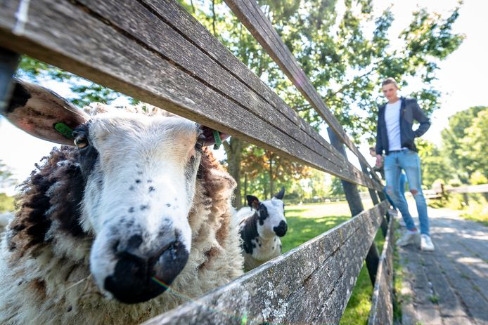 Al eerder ging kinderboerderij De Kerkestee in Hellevoetsluis beperkt open.