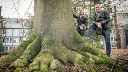 """""""100 jaar oude bomen mogen niet sneuvelen"""""""