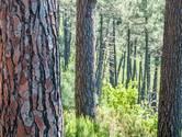 14 september: Expositie over bomen in Terneuzen