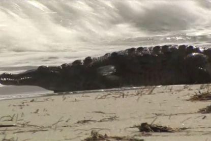 Dit wil je écht niet tegenkomen op het strand