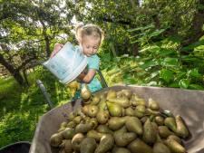 Weer peren plukken bij Hof van Seghwaert