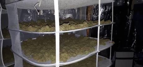 15 kilo gedroogde hennep gevonden in Roosendaal: Vier verdachten aangehouden