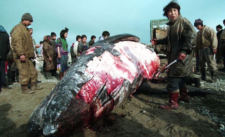 De Tsjoektsja slachten in Lorino een van de 56 walvissen die ze dit jaar mogen vangen. Beeld Joeri Kozyrev