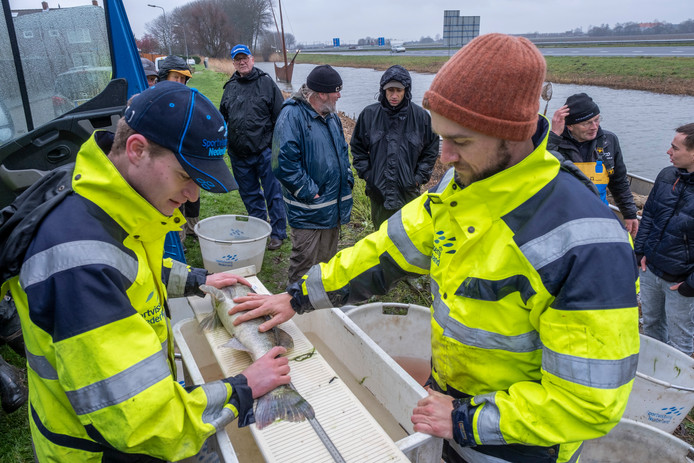 Thijs van den Acker (links) en Marcus de Boer meten de vissen in het Oude Gat in Arnemuiden om te bepalen hoe gezond de visstand daar is.