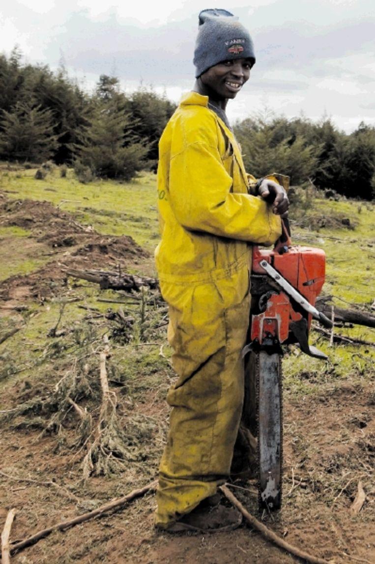 Een werknemer van Timsales, de firma die verantwoordelijk is voor veel houtkap. (Trouw) Beeld