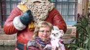Eerst schaar in pols gekregen, daarna beroofd van chihuahua: slachtoffer wijst naar vroeger baasje van hond Romy