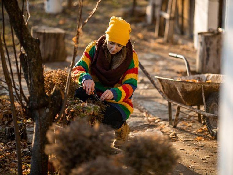 Het voor- en najaar zijn de ideale tijdstippen om je hagen, bomen en struiken te snoeien.