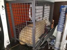 Politie 'verliest' schapenrodeo in Ootmarsum