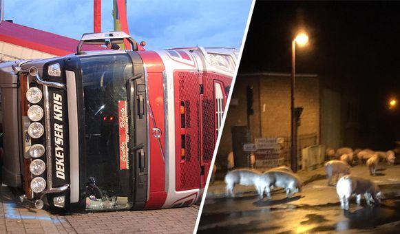 De vrachtwagen met 210 varkens kantelde om.