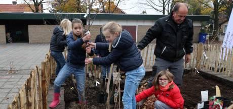 Cola-kruid en Franse uiensoepboom op het schoolplein in Hulst