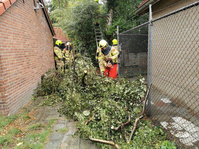 De brandweer bij de boom in Wageningen.