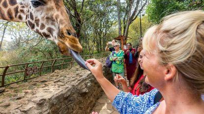 Waarom is een giraffentong paars?