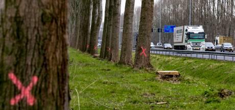 Vughtse actiegroep wil hout van 1750 bomen langs A2 duurzaam gebruiken in de regio