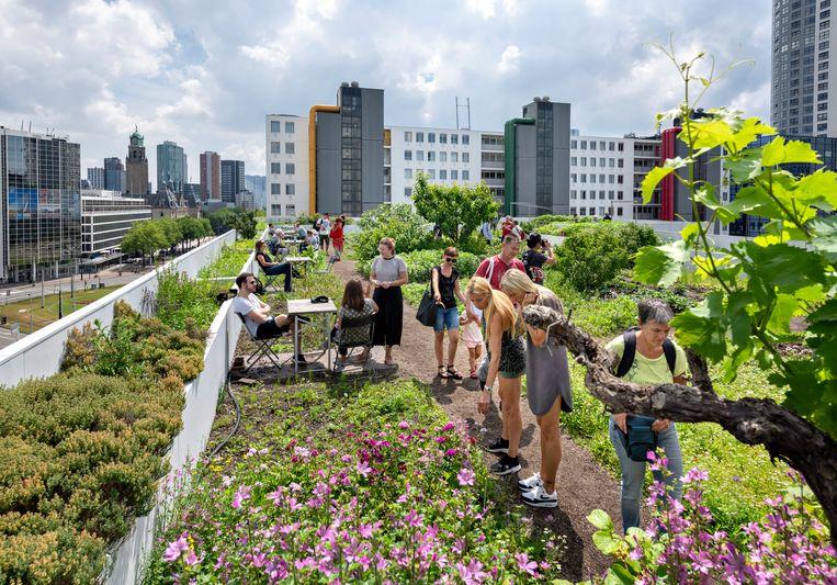 Bovenop het Schieblock in Rotterdam is het eerste grote oogstbare dak in de Nederland gerealiseerd: de Dakakker. Beeld Hollandse Hoogte / David Rozing