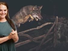 Een hek tegen de wolf? Laat failliete ondernemers maar schaapsherder worden