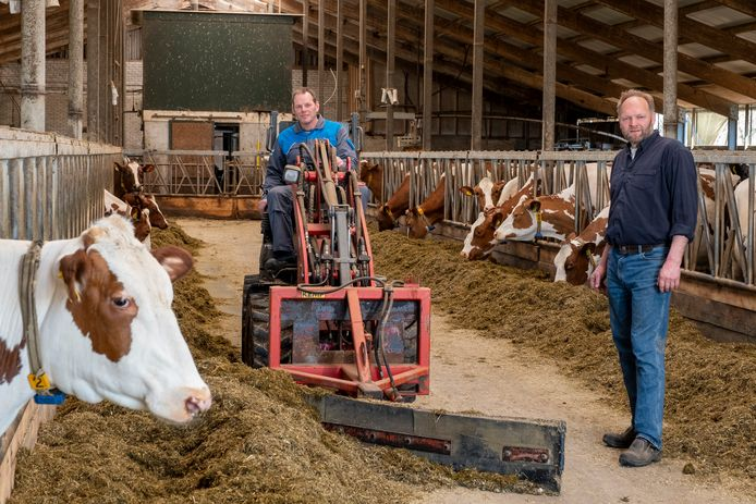Vaste vervanger Johan Vorderman (l) en buurman Gert Karel Bruggert houden het melkveebedrijf gaande voor Evert Luchtenbeld en Jacomien Voorhorst, die Nieuw-Zeeland niet mogen verlaten vanwege de totale lockdown.