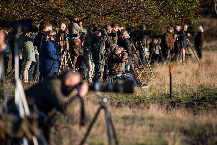 HOOFDFOTOArnhem - Fotografen verzamelen zich op die plekken in Nationaal Park de Hoge Veluwe waar ze de edelherten in hun bronsttijd kunnen fotograferen en horen burlen Beeld Hollandse Hoogte