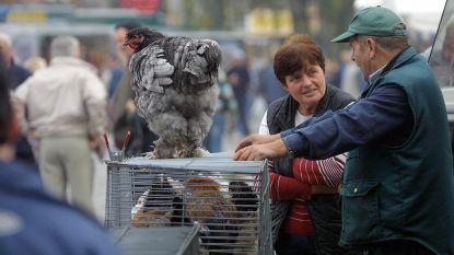FAVV weigert vogelhobbybeurs