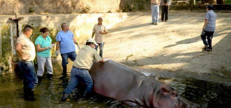 Dierentuin El Salvador onderzocht na verdachte dood aantal dieren