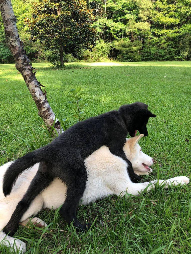 Nymeria dolt met haar broer Ghost.