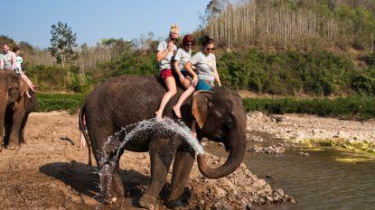 Corendon schrapt excursies die dierenleed veroorzaken