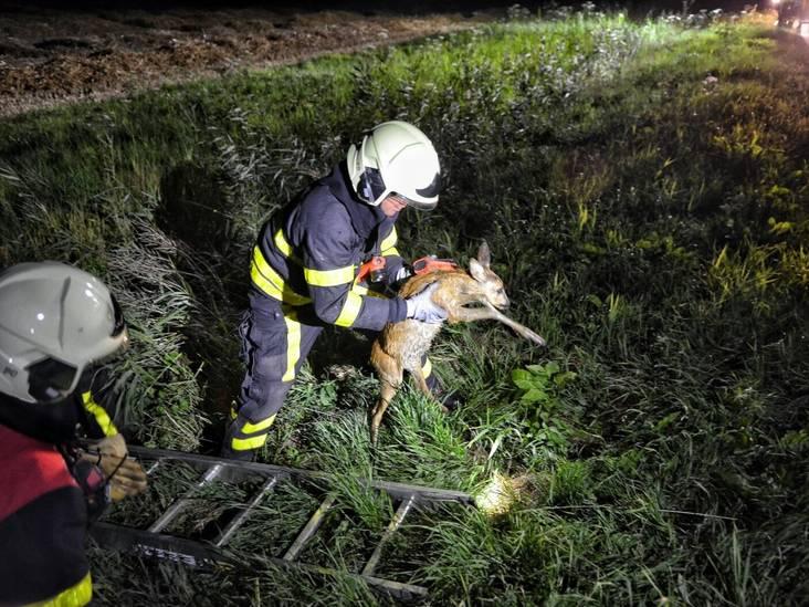 Brandweer redt jonge hertjes in Hoeven