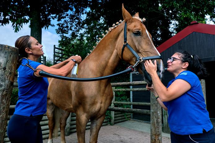 De Griekse Dimitra-Eleni Pantechaki en trainster Marianna Grammatikaki verblijven met paard Miss Olimpia in Dordrecht voor het EK para-dressuur.