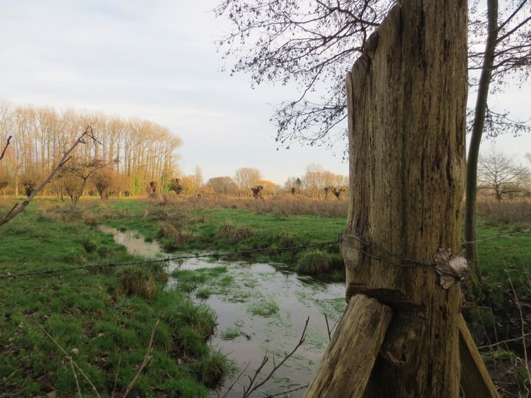 De sperwer, de wielewaal en de torenvalk hebben hun broedgebied in de Molenbeekvallei in Vremde. molenbeek boechout