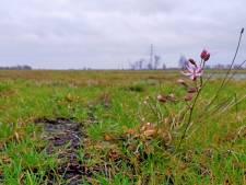 Dapper bloemetje trotseert de koude wind