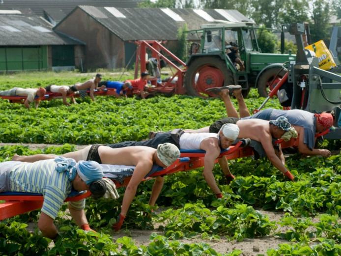 Poolse arbeiders werken in de regio voornamelijk op het platteland.