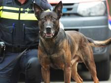 Politiehond Zorro spoort inbreker op in Veere