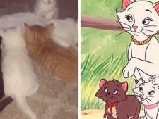 De Aristokatten in het echt: zwerfkat Duchess wereldberoemd dankzij kittens