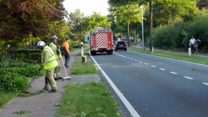 Truck raakt boom en splijt stam in twee: brandweer moet ingrijpen