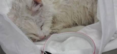 Fleur (18) redt piepklein katje van verdrinking in Almelo: 'Heldin van de dag'