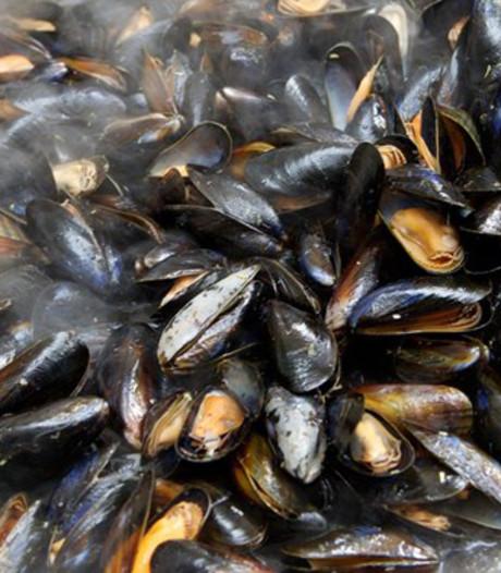 Belgen gaan eigen mosselen kweken voor Zeeuwse kust
