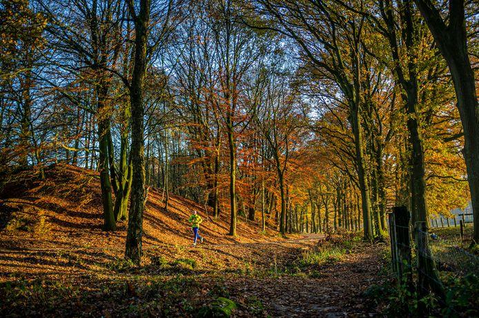 Hardlopen in het bos. Foto ter illustratie.