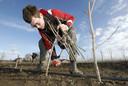 Kwekers planten de Noorse esdoorn