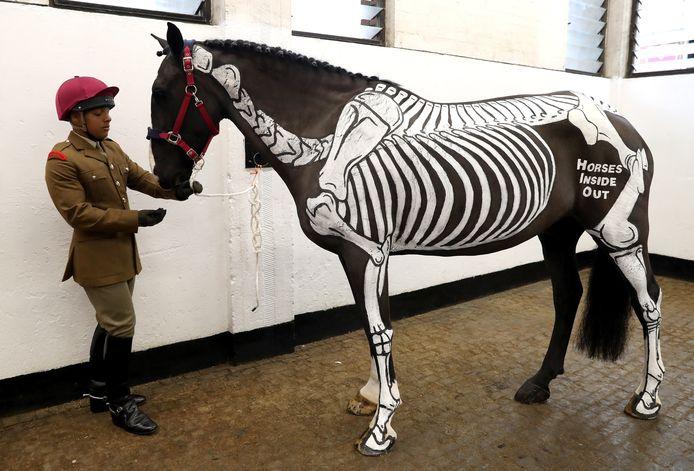 Het paard Quinn,  waarop een skelet is geschilderd,  wordt in gereedheid gebracht voor een bezoek van Koningin Elizabeth II aan de Household Cavalry in Londen. Het dier wordt gebruikt bij lessen over anatomie aan officieren. Foto: Chris Jackson