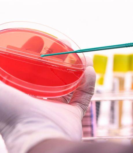 Un virus de grippe porcine découvert en Chine pourrait provoquer une prochaine pandémie