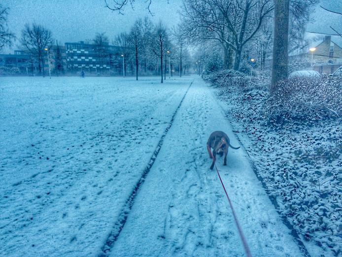 King geniet van de sneeuw in het Nelson Mandelapark in Eindhoven.