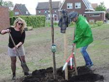 GroenLinks plant boom in Beltrum
