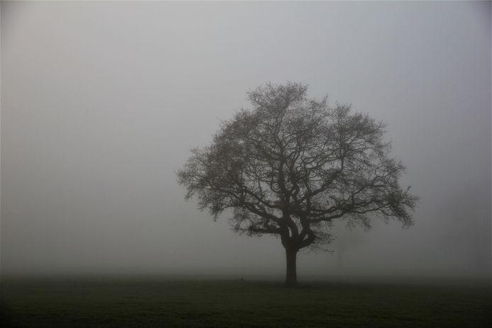 Een grillige boom in de mist aan de Eikelenboomseweg te Gendringen.