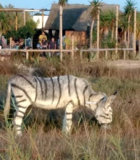 Kritiek op stel dat in safaristijl trouwde met daarbij als zebra's beschilderde ezels